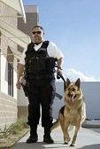 Guardia de seguridad acompañado por un perro.