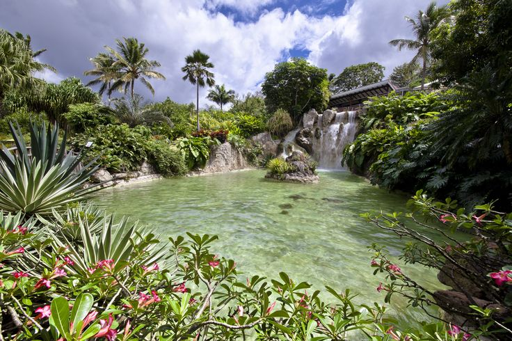 267 best jardins d 39 exception images on pinterest for Jardin botanique guadeloupe