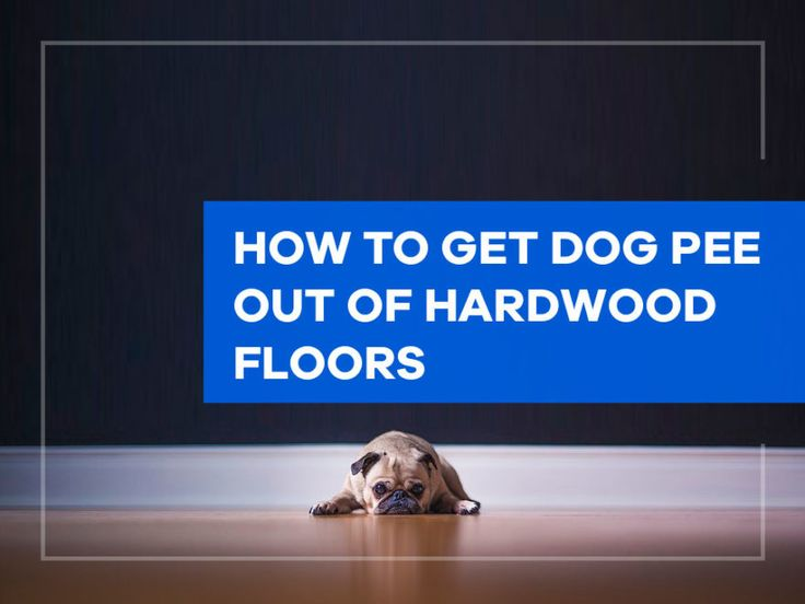How to Get Dog Pee out of Hardwood Floors - House Cleaning ...