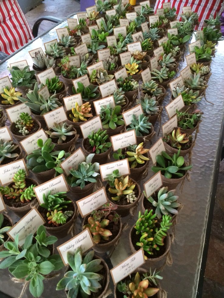 Succulents galore! Such a cute idea for your guest gifts!!! From $3.00 www.vintagelabelle.com.au