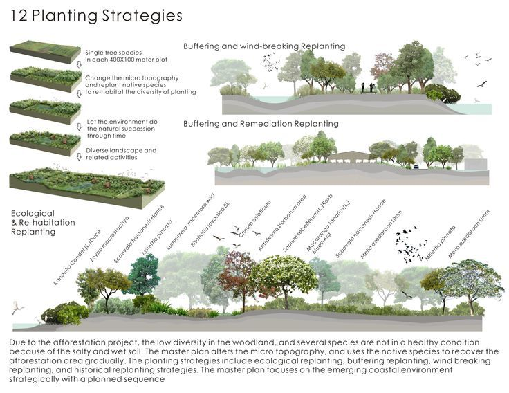 Strategy phase landscape diagram google search art presentation pinterest landscapes - Garden design basics ...