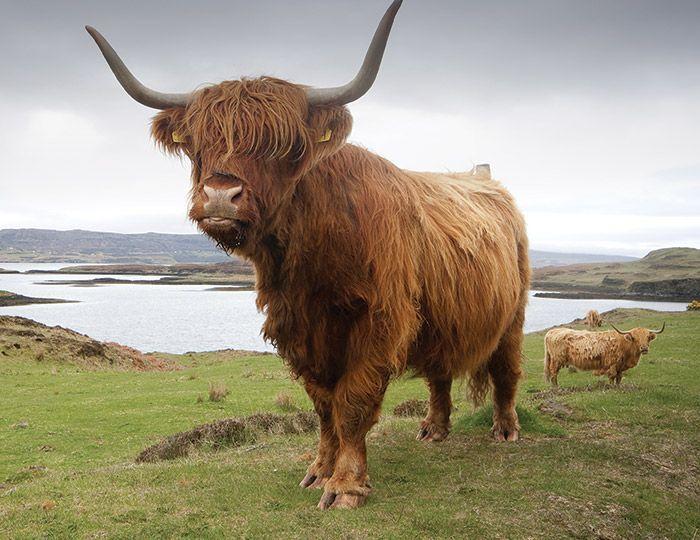 Holidays in Scotland | Adventure Travel Shop