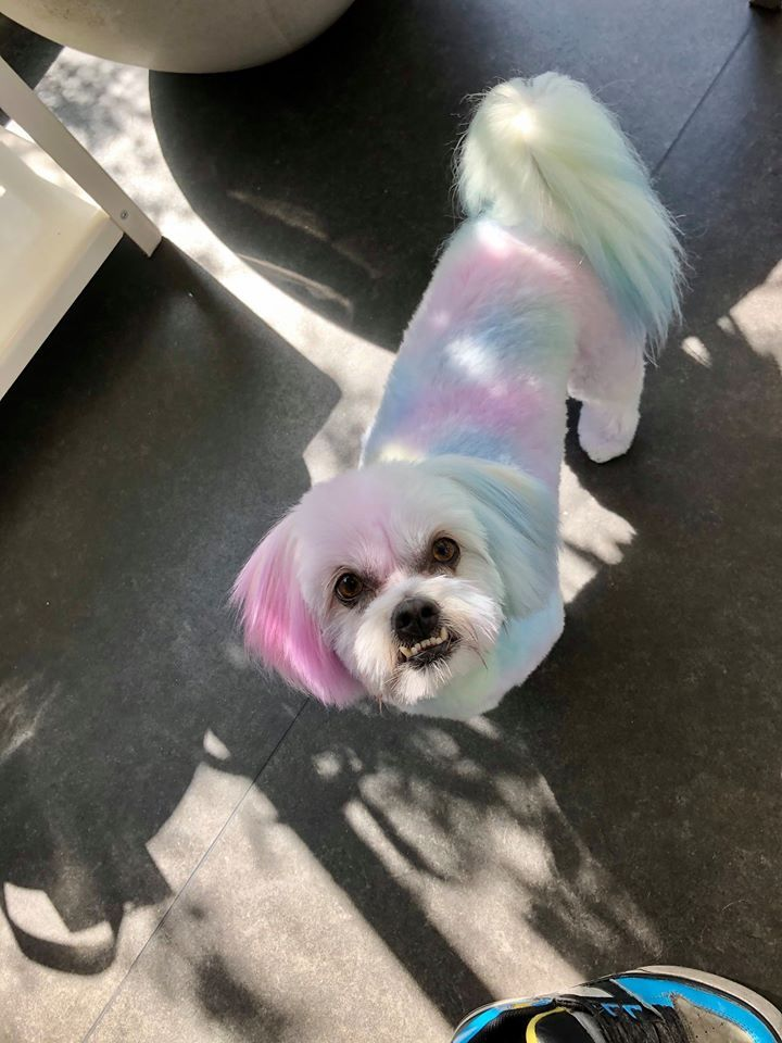 Get Pretty Pastel Tones On Pets In 10 30 Minutes While You Bathe Them The Safe Formula Is Great For All Pets That Can Be Wa In 2020 Color Shampoo Pets Funky Colour