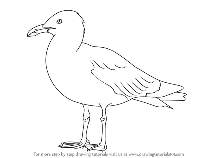 Learn How to Draw a Herring Gull (Seabirds) Step by Step : Drawing Tutorials