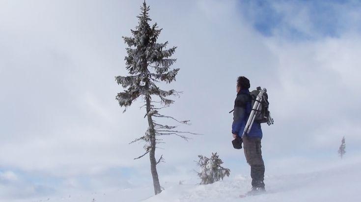 Patrik Qvist finding old Tjikko, a thousand year old tree Skärmavbild 2014-03-22 kl. 17.45.48