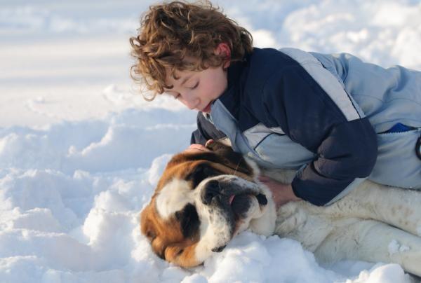 Las razas de perro ideales para niños #mascotasuncomo #perrosuncomo #perroscachorros #perrosgrandes #razasdeperros