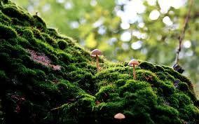 pink fungi