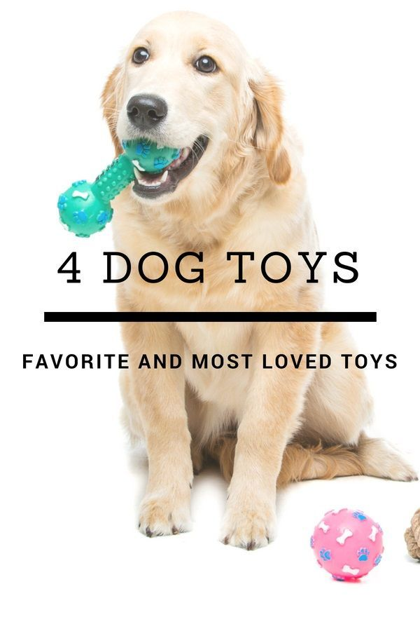 4 Of The Most Loved Dog Toys Dogs Training Your Dog Dog Training