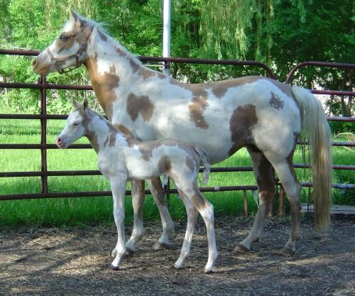 5000 Best Horse World 3 Images On Pinterest