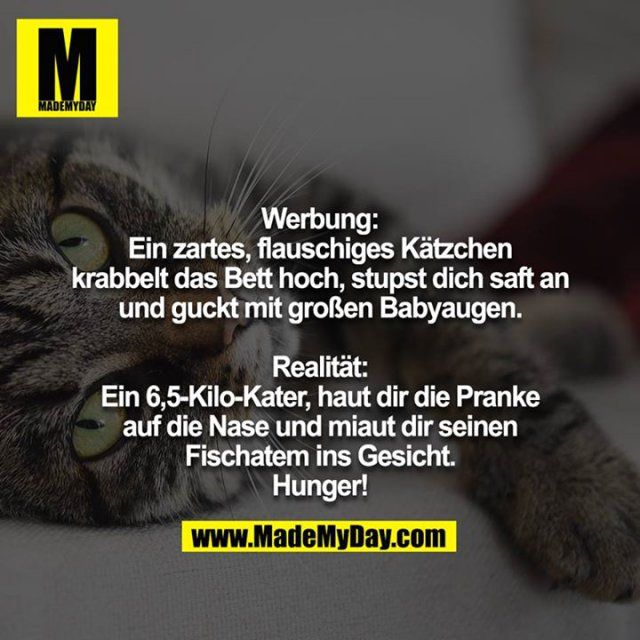 Pin Von Michaela Auf Zitate Lustige Susse Katzen Lustig Humor Katzen Witze