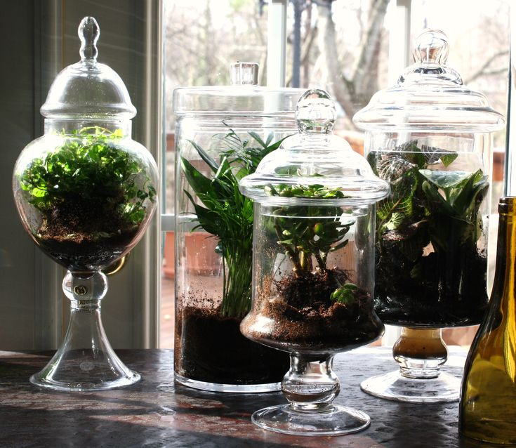 Pin By Apothecary Jars On Gardening With Jars Terrarium