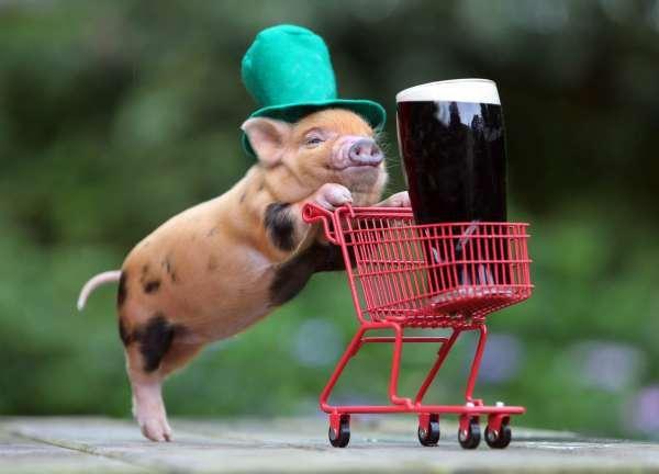 5. Un bébé cochon avec son mini-caddie et sa bière et un petit cochon rouquin