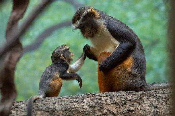 39 imagens tocantes que revelam que quando o assunto é família todas as espécies são iguais - Fatos Desconhecidos
