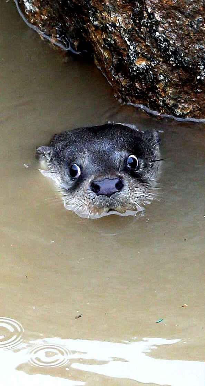 Crazy Otter