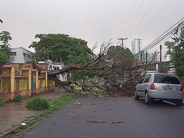 Árvore cai e interrompe rua em bairro da Zona Norte do Recife Planta ficava em quintal de casa e atravessou a via inteira. Emlurb mandou equipe ao local para fazer a limpeza. Uma árvore localizada no quintal de uma casa, na Rua Oscar Pinto, em Casa Amarela, Zona Norte do Recife, caiu, por volta das 6h30 desta quarta-feira (24). Apesar de a vegetação ocupar toda a largura da  24/04/2013 10h20 (Leia [+] clicando na imagem)