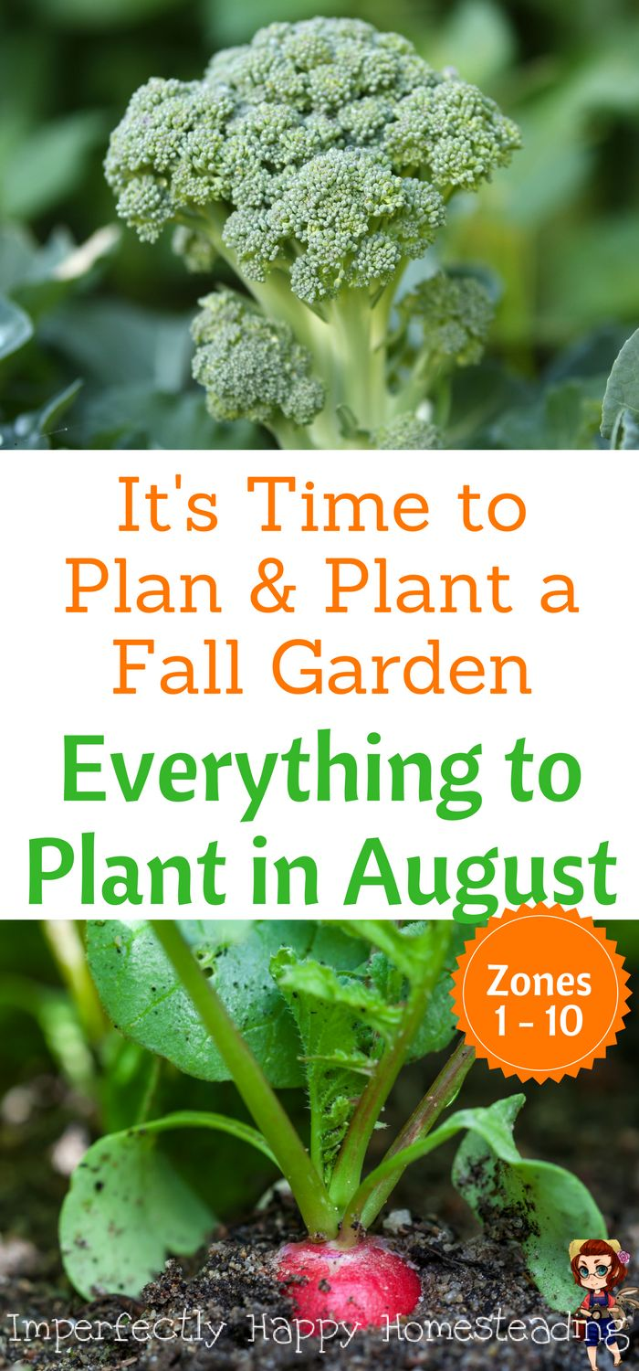 Everything to Plant in August Zone 1, 2, 3, 4, 5, 6, 7, 8, 9 and 10. Plan and Plant Your Fall Garden Now!