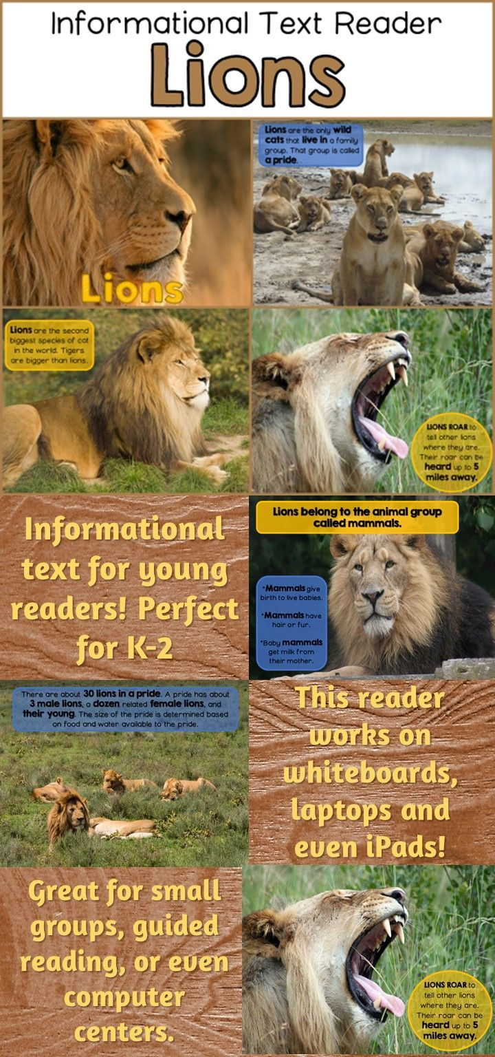 Best 25 lion information ideas on pinterest tiger information lions informational reader for early learners ebook format is great for ipads computers fandeluxe Ebook collections