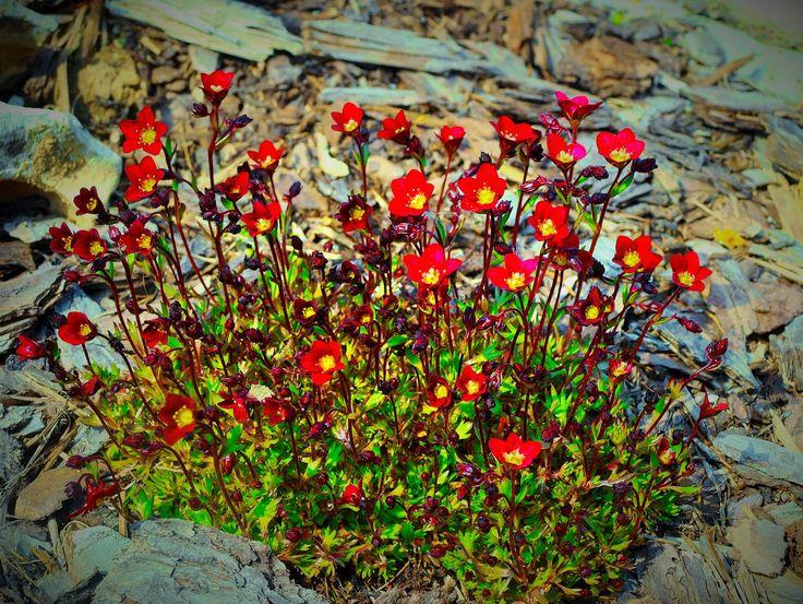 perennial rock garden 2