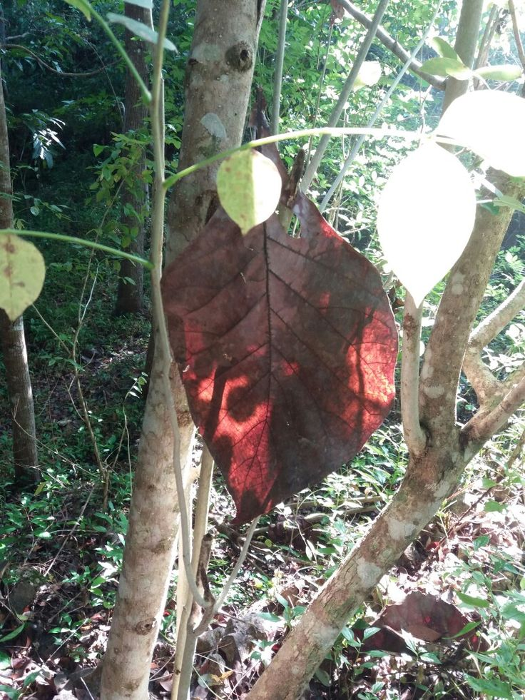 The art 9f leaf found in the forest