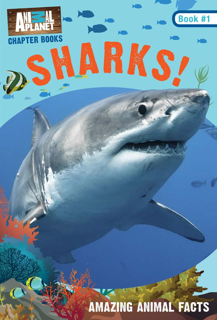 best 25 shark books ideas on pinterest big shark ocean theme
