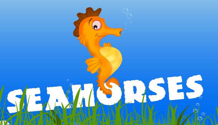The seahorse is a tiny fish that has a horse-like head and curled tails. Seahorses can be found swimming in groups, always in an upright position.