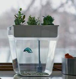 AquaFarm by Back to the Roots | AquaFarm Australia - Fluid Growers