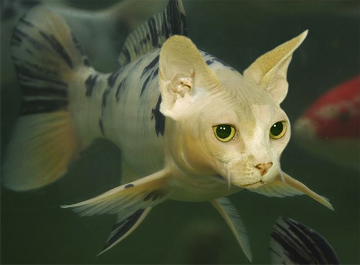 Catfish by mceric on deviantart creepy critters for Fish video for cats