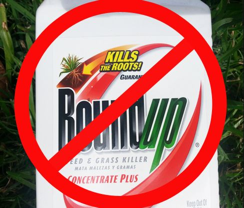 Hate Chemicals...Why Roundup is Bad: Roundup is the brand name of an herbicide produced by the U.S. company Monsanto, and contains the active ingredient glyphosate. Glyphosate is the most widely used herbicide in the USA, according to the EPA .Glyphosate causes oxidative damage to human skin cells.