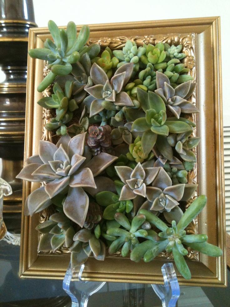 17 Best images about Succulent