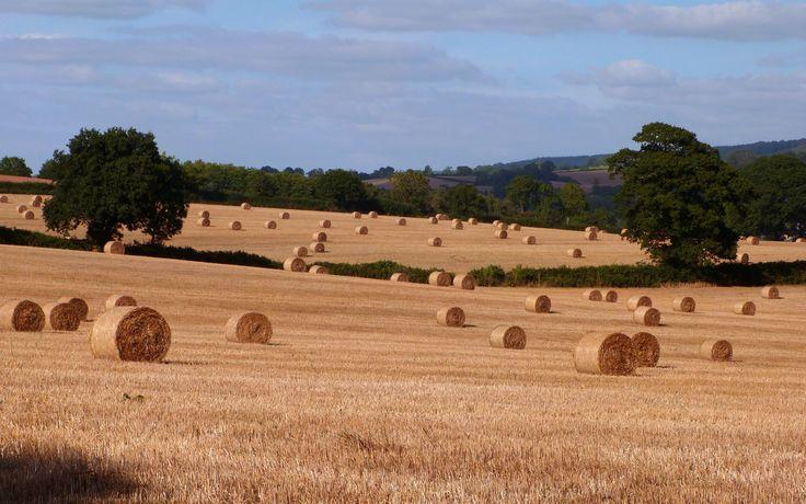 Harvest fields near Colaton Raleigh in East Devon
