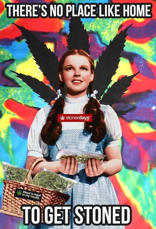 Dorthy's Got The Dank Medical Marijuana Quality Matters Repined By 5280mosli.com Organic Cannabis College Top Shelf Marijuana High Quality Shatter #OrganicCannabis