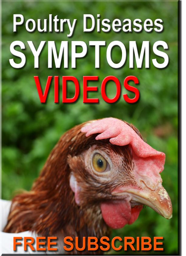 Poultry diseases videos for learning materials
