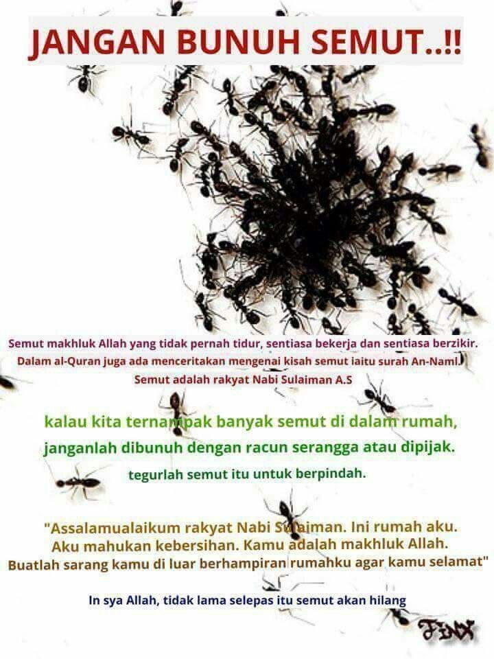 Cara menghilangkan semut dr rumah kita