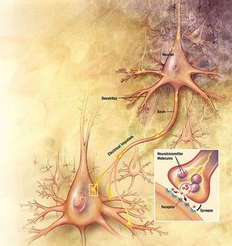 253 best images about Peripheral Neuropathy on Pinterest | See more ideas about Physical therapy ...