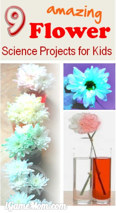 9 amazing flower science projects for kids, colors, water absorption, lights, … fun spring and summer science experiments at home backyard or kitchen, also great as school class project or science fair project