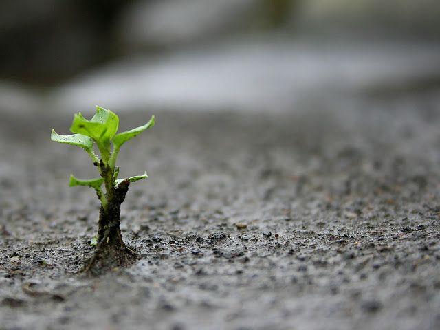Venbariarismes: L'esperança no és ingenuïtat