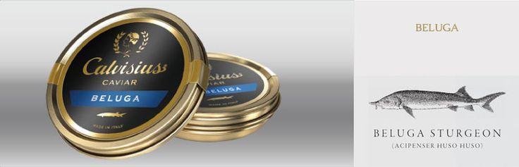 caviar beluga sturgeon buono