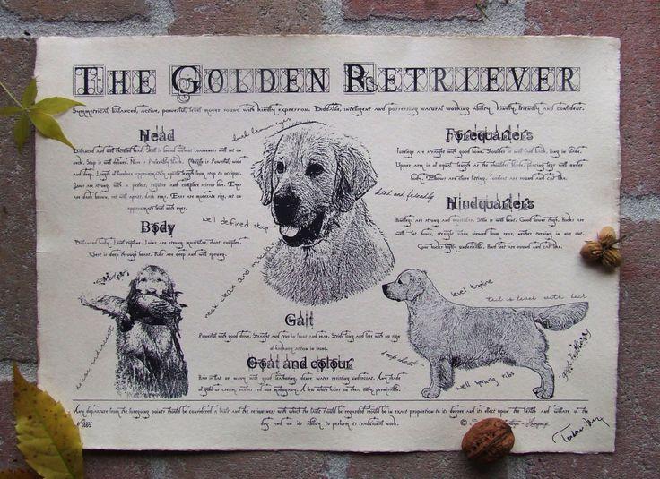 Antique styled dog standard - Golden Retriever by Creativedoglover on Etsy