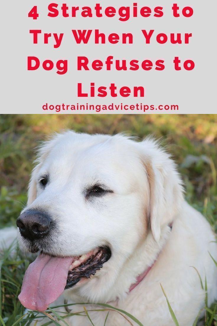 Dog Training Near Me Vs Online Dog Training Dog Training Dog Training Near Me Online Dog Training