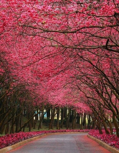 17 Best Images About Flowering Trees Shrubs On Pinterest