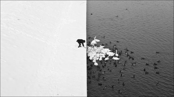 A Man Feeding Swans in the Snow, by photographer Martin Ryczek   Awesome composition!