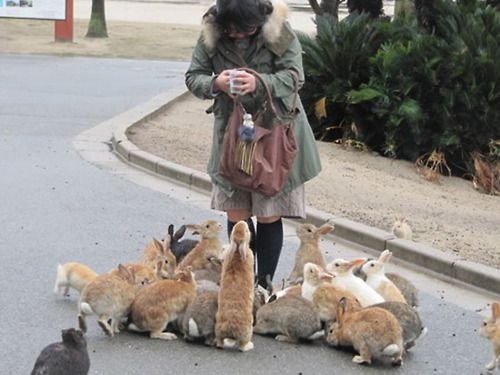 """Okunoshima -Island Japan.  OMG this is so cute, is she the """"bunny lady"""" that comes and feeds them everyday?   If so, then God Bless her!"""