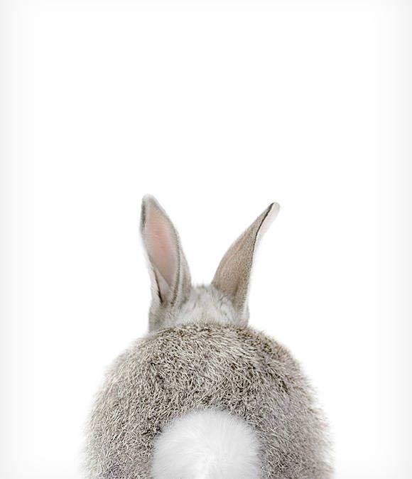 Rabbit tail print, Bunny, Animal print, Baby rabbit, Woodland Nursery decor, Animal art, Baby animals, Nursery wall art, The Crown Prints
