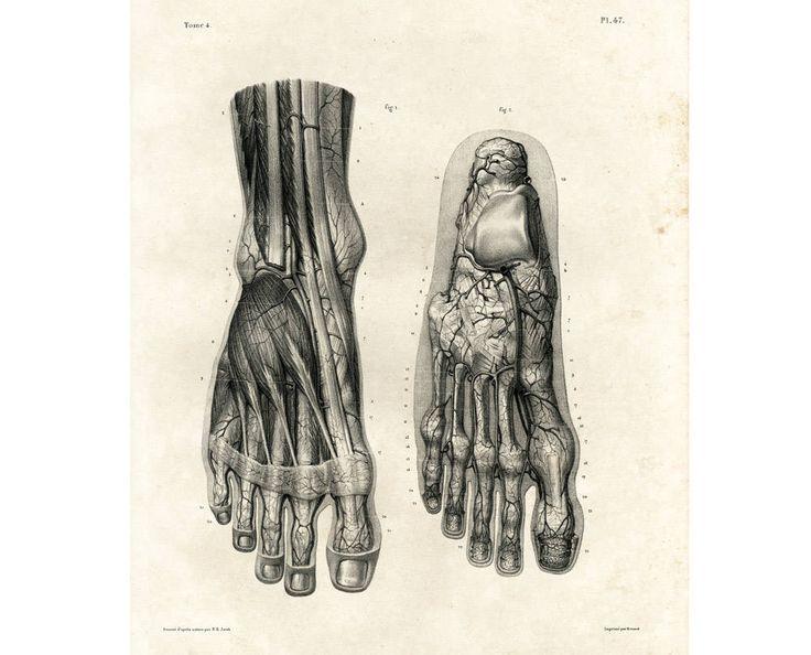 1836 Artères de la face dorsale du pied. Jambes Homme Adulte. Ancienne Planche Anatomique Corps Humain Bourgery Poster Anatomie Medecine de la boutique sofrenchvintage sur Etsy