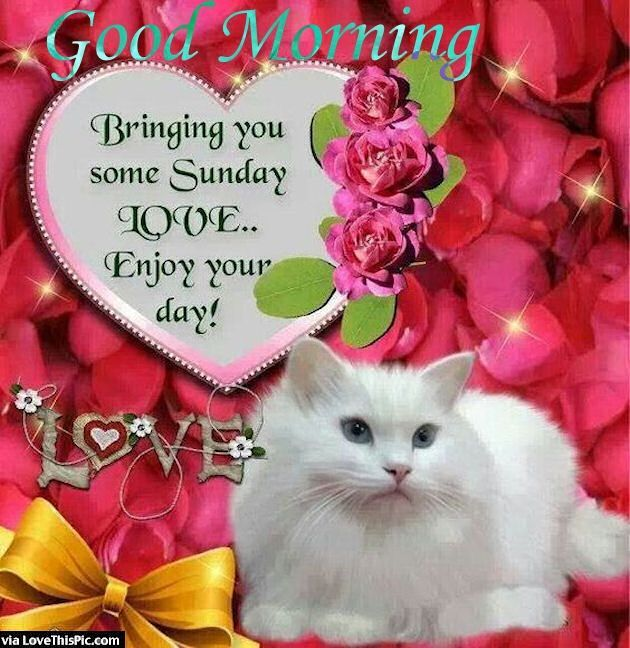 Bast Love Pictures With Good Morning: 12 Best Images About Sunday Greetings On Pinterest