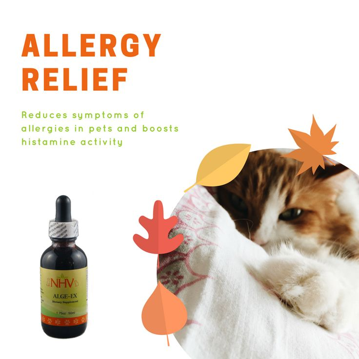 A safe and fast acting herbal supplement that helps your cat fight seasonal and environmental allergies.  Alge-EX will help your cat or dog combat symptoms associated with allergies such as itchy watery eyes, rubbing of face and eyes, itchy ears, nasal discharge and sneezing. Find this remedy on www.nhvnaturalpetproducts.com
