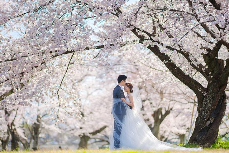 Is there any greater inspiration than Mother Nature herself? Claude and Clarabelle think not and their Spring pre-wedding shoot in Kyoto, Japan, wondrously captured by Alwin from Trouve, is tribute to her magnificence.