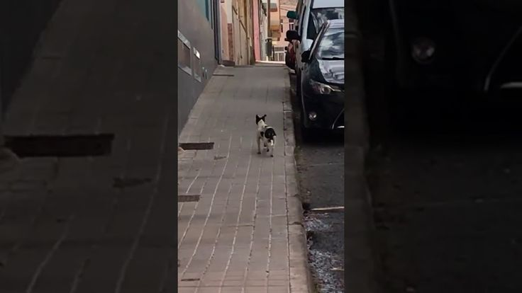 Perro callejero atropellado  https://youtu.be/GX1CQnwdaNA  Gran Canaria Telde La Herradura. Muy asustadizo lo han atropellado 2 veces y necesita ayuda para rescstarlo. http://bit.ly/2h4i8ry