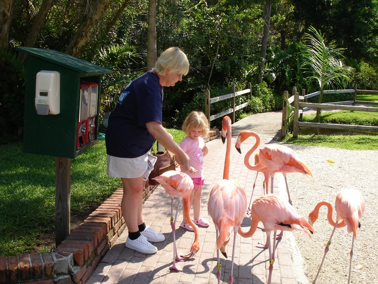 17 Best Images About Florida On Pinterest Epcot Key West And Fishing Trips