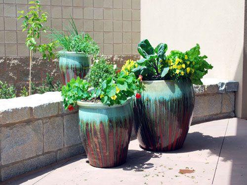 71 best Container Gardening images on Pinterest | Container garden ...